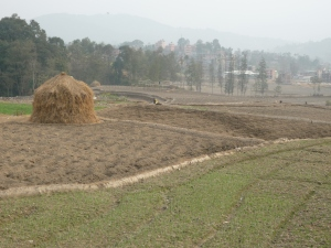 Typically shaped haystack around Banepa