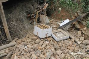 A destroyed bee hive in Phoolbari Village after the earthquake.