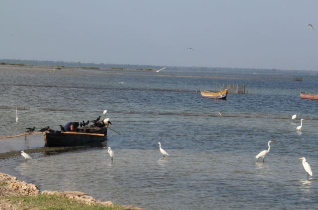 Beautiful Jaffna Lagoon
